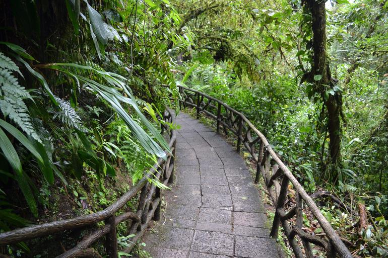 pont-entre-arbres-nature-jungle-costa-rica