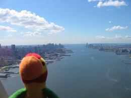 The famous Polly Parrot flies over Manhattan., Pamela D - September 2008