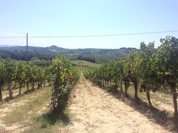 This is the vineyard vines of the farm we had lunch at. Everything we ate was grown here from the olive oil to the wine and everything was spectacular! , J. Atchley - October 2015