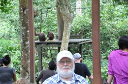 Papa Jean-Guy Rioux, Sr with Orang Utans feeding in the background , Jean-Guy R - May 2016
