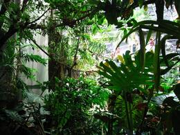 Inside the rainforest sphere. - November 2009