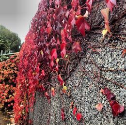 beautiful Invasion , Amna A - October 2013