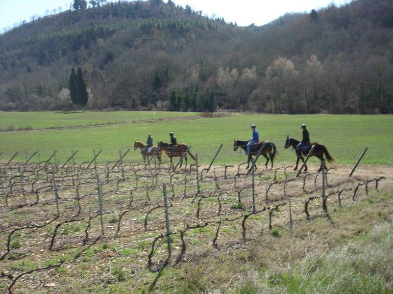 Vineyard Ride - Florence