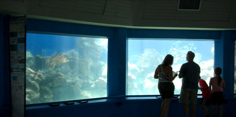 Coral World Ocean Park - St Thomas