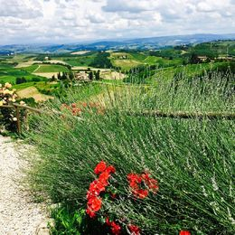 sampling wine, nibbling on bruschetta and olive oil, and taking in these views , Elizabeth S - June 2016