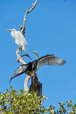 Everglades Birdlife , John G - October 2012