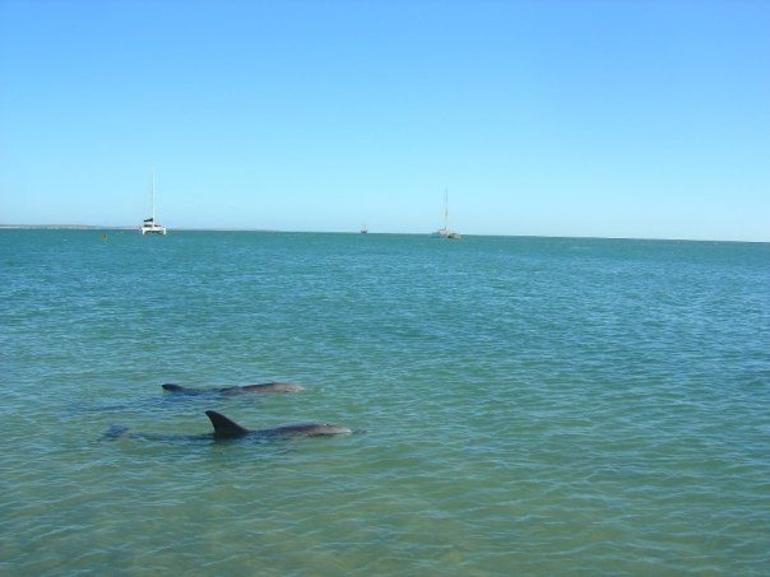 Monkey Mia dolphins - Perth