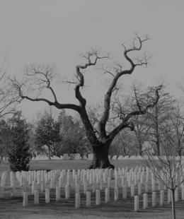 I took this picture during the Arlington tour. I love the tree, , Michele B - February 2017