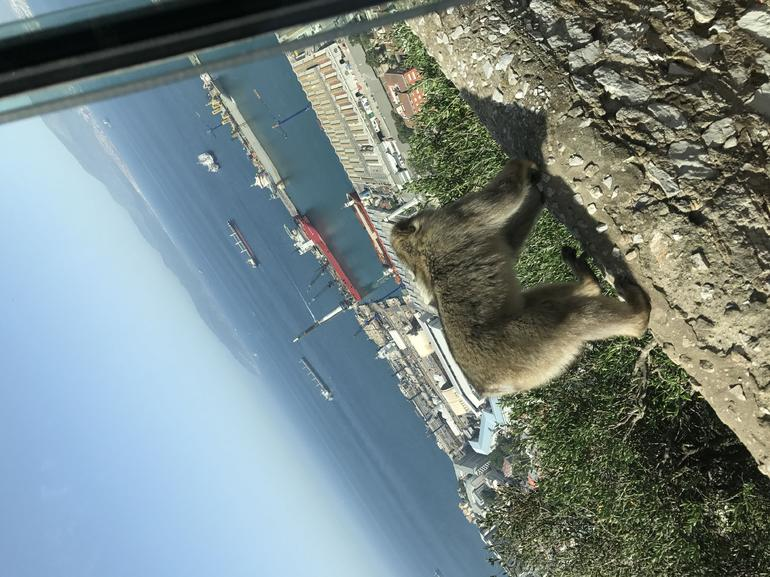Gibraltar Express - Sightseeing Full Day- From Malaga photo 24