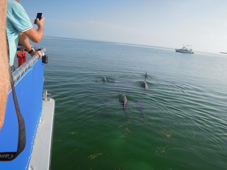Key West Dolphin Watch and Snorkel Cruise photo 13