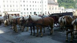 Horse carriage tours in Salzburg, Austria , Patricia S - May 2011