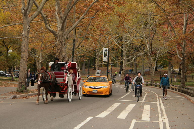 NYC Central Park Bike Rental photo 22