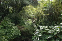 What a wonderful day to walk a trail in the El Yungue Rainforest! , Sheila T - December 2011
