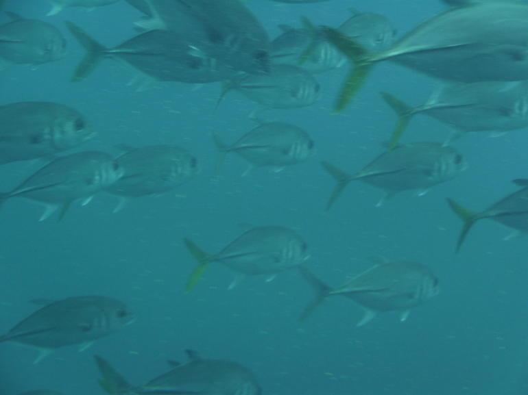 Fish - Barbados