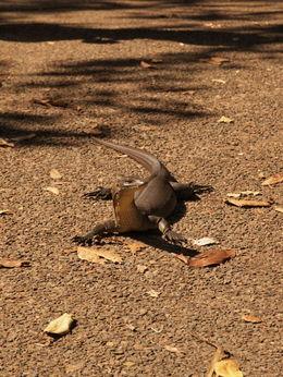 Lizard mate , Dave B - July 2015