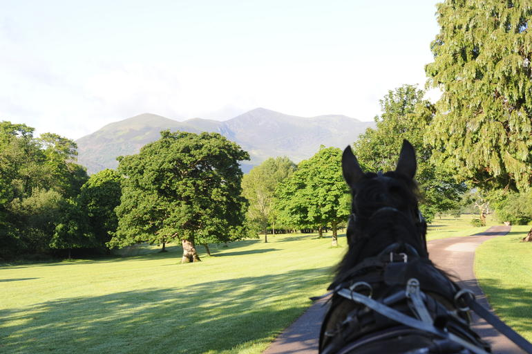 Jaunting Car Tour to Ross Castle from Killarney photo 10