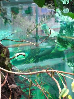 Parts of the aquarium tanks are visible at the bottom of the rainforest. - November 2009