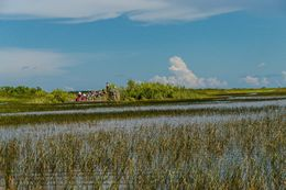 Gator Park / Airboat Tour , Jessica L - June 2016
