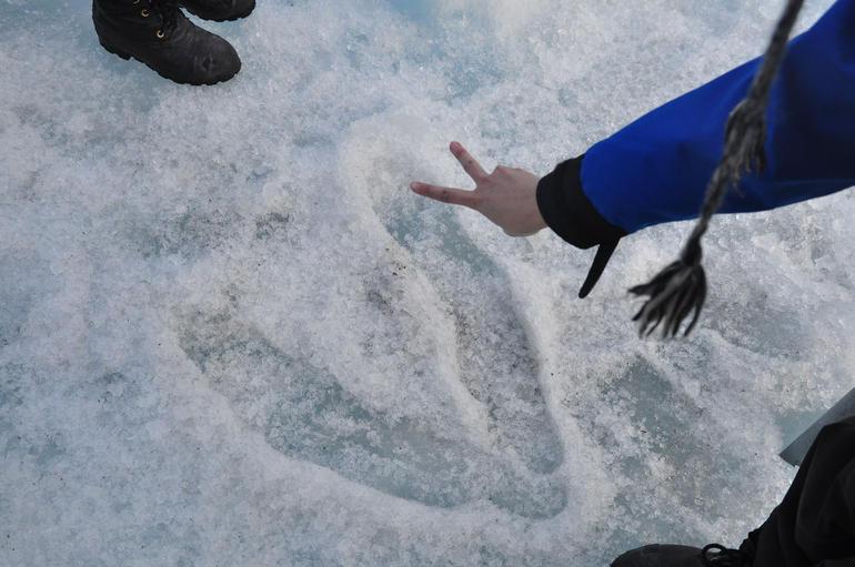 V - Franz Josef & Fox Glacier