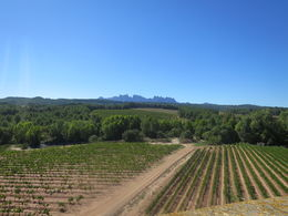 Oller El Mas vineyard , Melissa G - October 2015