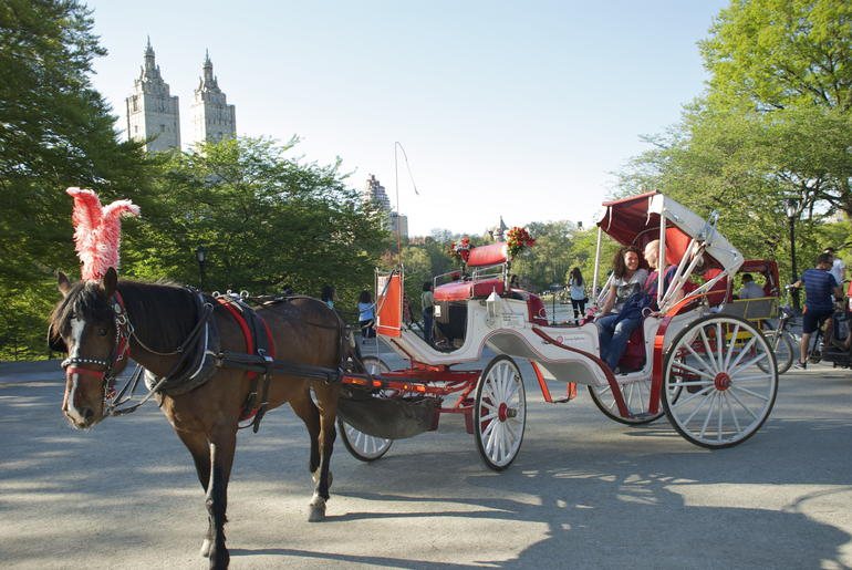 Horse and Carriage Ride - New York City