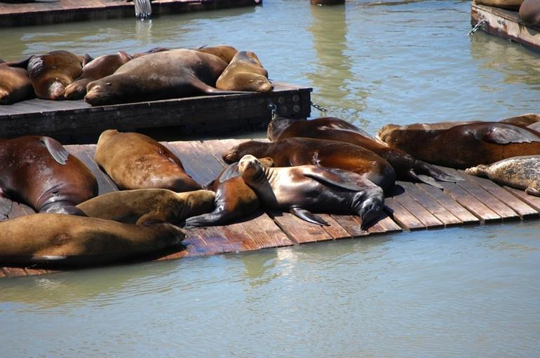 sun bathing - San Francisco