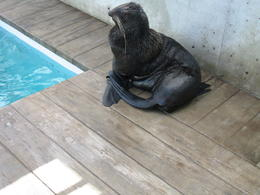 Furry Seal , William H K - December 2011