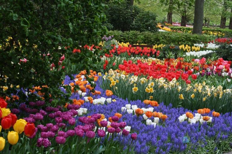 Keukenhof Gardens and Tulip Fields - May 2013 - Amsterdam