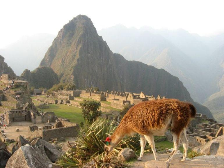 Llama and Machu Picchu - Cusco