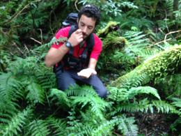 notre guide nous explique la flore de la forêt, des fougères, podocarpes profitent d'importantes précipitations 5000mm par an au village de Franz Josef , Ghislaine R - May 2014
