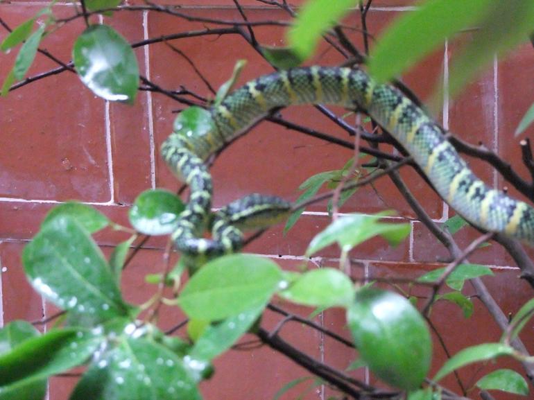 snake temple penang.JPG - Penang