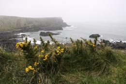 Flowers at the Giant's Causeway , Alex Barnard - April 2011