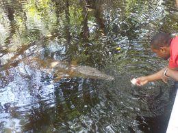 Feeding the croc , Chris B - August 2016