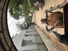 our horse taking us on a trip to lunch , Danielle W - March 2017