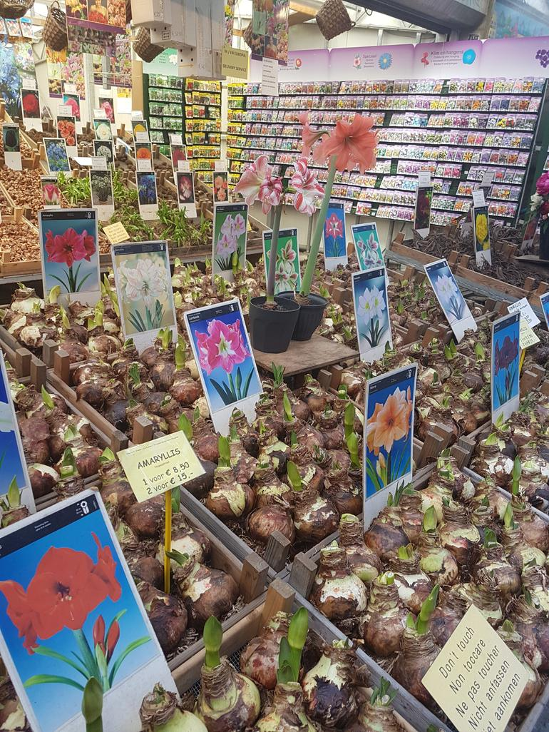 Amsterdam Alternative Culture Walking Tour with Local Food Sampling