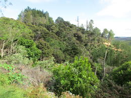Waitangi Trust Preserve , Jay - January 2018