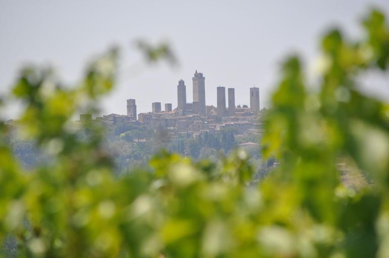 San Gimignano thru Chianti grapevines -