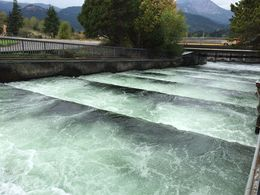 Dam Level for fish to travel up for spawning , Jordan D - October 2015