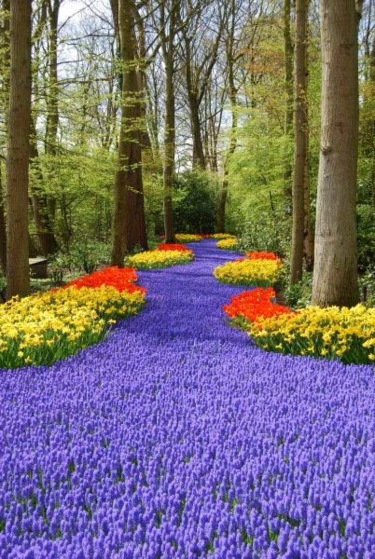 Keukenhof Garden - Amsterdam