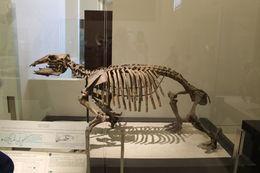 Un squelette ???? , Alain P - July 2015