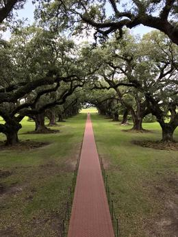 View from 2nd floor balcony at Oak Alley Plantation. , Martha T - May 2017