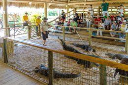 Gator Park / Wildlife Show , Jessica L - June 2016
