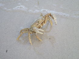 At the 7 mile beach, the crab was everywhere... , Diana J - September 2015