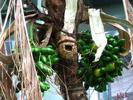 Nest & fruits - life in the rainforest. - November 2009