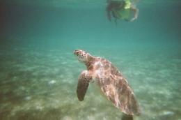 Visiting sea turtles - November 2009