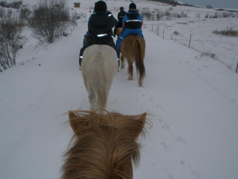 Viking Horse Ride - Reykjavik