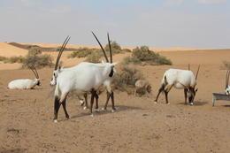 Some of the wildlife on the desert safari. , Edward W - December 2014