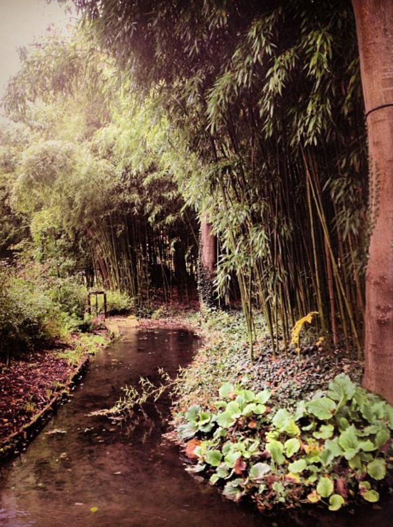 Bamboo - Paris