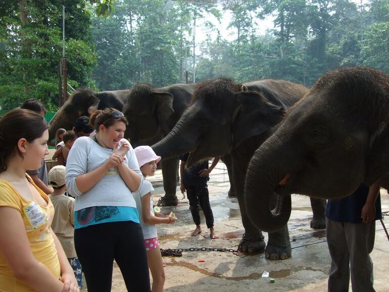 Elephant's trunk - Kuala Lumpur