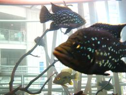 Groups of glittering fish at the exit of the rainforest. - November 2009